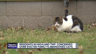Residents in Highland Township concerned over evicted family's abandoned cats