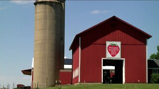 Farmers adapt to safety measures during strawberry picking season