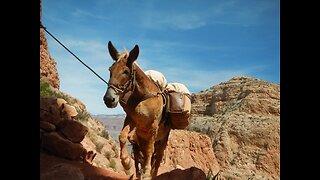 CAUTION! 6 most dangerous hikes in Arizona - ABC15 Digital