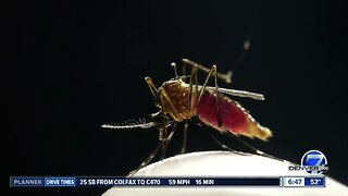 Officials warn of bad mosquito season