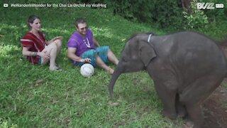 Un cucciolo di elefante giocherellone!