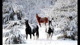 Winter is beautiful with beautiful music
