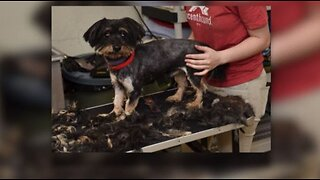 24 dogs rescued from hoarding situation
