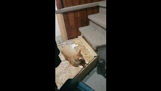 Baby cat annoying!