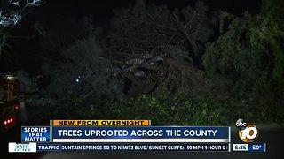 Trees fall around San Diego County