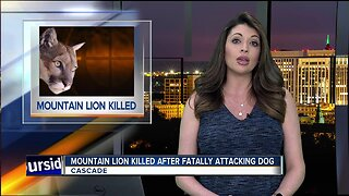 Mountain lion killed after fatally attacking pet dog near Cascade