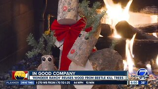 Reindeer Ranch recycles beetle kill tree into Christmas decorations