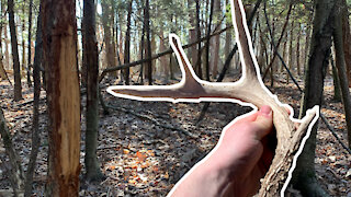 Shed Hunting in PENNSYLVANIA! 2021