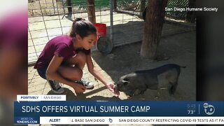 SDHS offers virtual summer camp