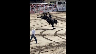 Saddle Bronc at the Calgary Stampede Rodeo