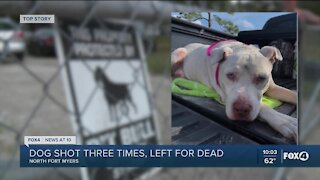 Owners defending themselves after dog found shot
