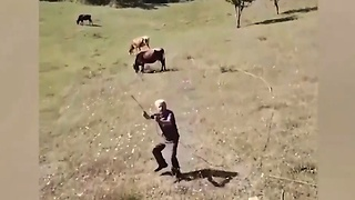 Shepherd sees drone for first time, tries to attack it
