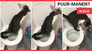 Baffled hairdresser films cat using bathroom toilet like a person whilst its owner gets a fresh trim