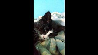 Cute cat Is sleepy