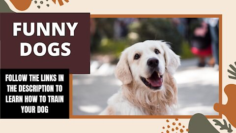 Funny DOGS   Learn the basics of dog training