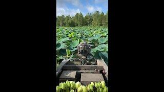 Cruising through the Lotus