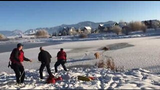 Dog rescued from Montana's frozen pond