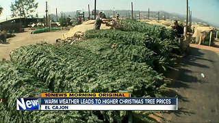 Warm weather brings higher prices for Chrismas trees