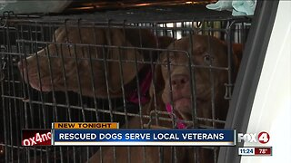 A dozen dogs rescued from Tropical Storm Barry