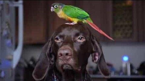 Hund og fugl er bestekompiser