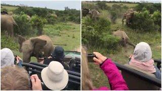 Babyelefant sklir ved siden av turister i Sør-Afrika