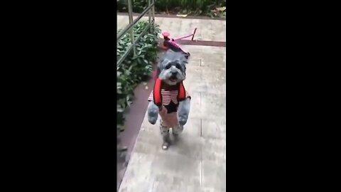 My dog goes to school