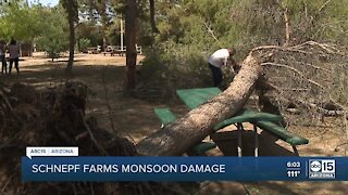 Schnepf Farms sees sever monsoon damage