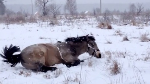 Heavy snowfall brings out this playful horse's inner child