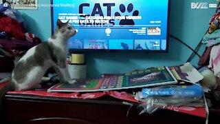 Gato entretém-se a caçar peixe durante quarentena