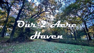 Our 2 Acre Haven - Fall Leaves