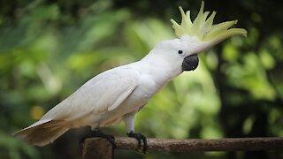 The parrot makes strange noises