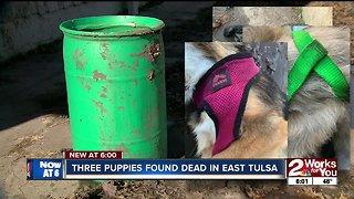 Three puppies found dead in East Tulsa