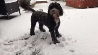 Tilluy, hunden som elsker å leke i snøen