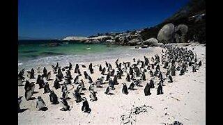 life in Antarctica | Penguins