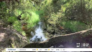 Walking Club: Exploring Myakkahatchee Creek Environmental Park