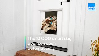 This $3,000 smart dog door opens automatically
