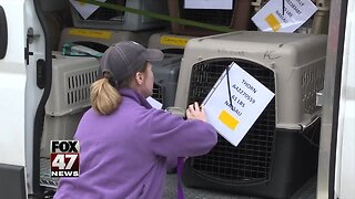 Capital Area Humane Society takes in Florida shelter dogs