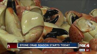 Stone crab season starts today