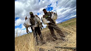 Snow Goose Hunt in Arizona Desert