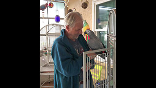 African Great Parrot loves to give kisses and snacks