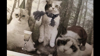 Taylor Swift's purrfect Christmas cards!