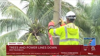 FPL secures power line after tree branch falls on it
