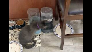 Cat loves water and spreads it everywhere