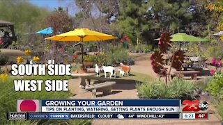 Growing your garden, tips on how to start your garden