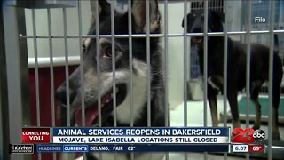 Animal services reopens in Bakersfield
