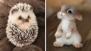 Cute baby animals😍 - Videos Compilation cutest moment of the animals