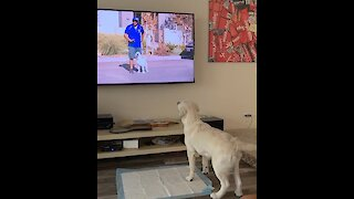 Dog Sees Itself On TV With Trainer, Does Happy Dance