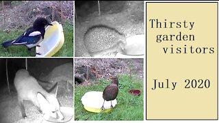 Thirsty garden visitors