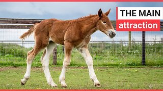 Birth of endangered and rare foal celebrated