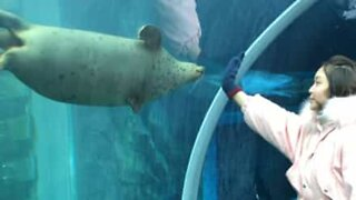 """Youngster shares """"dance"""" with inquisitive sea lion"""